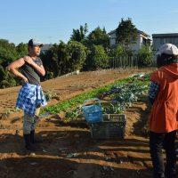 横浜市消費生活協働推進事業では、地産地消などを学ぶフィールドワークなどを実施。保土ケ谷区の農家には20人が足を運び、横浜の農業の現場を学びました。